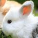 cute bunny live wallpaper by solar trap studio