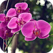 Orchid Flower Wallpapers by Dabster Software