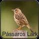 Canto Dos Pássaros Lark by Jehova app