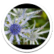 Blue Flower live wallpaper by Sub Nation