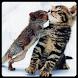 可愛い動物画像[ネコ]