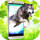 Wild Grey Wolf attack in phone scary joke 3D