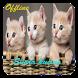Suara Kucing Lucu by dwelapps