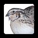 Quail Incubation Hatching Calendar