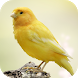 Canary Bird Sounds by eBook Apps