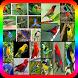 Kumpulan Suara Burung Lengkap by Suto App