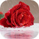 Rain Rose Live Wallpaper by Revenge Solution