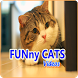 Funny Cats All Videos by Bejolia App