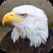 Kicau Burung Elang by KicauApp
