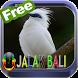 Master Kicau Jalak Bali HD by fridadev