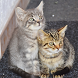 Cute Cats Wallpaper by Portieri Ahmad