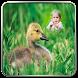 Bird Photo Frames by Tocus App