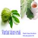 Manfaat daun sirsak by XvoroidApps