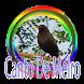 Canto Melro - Pássaro Preto by PerothaDev