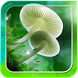 Mushroom Live Wallpaper by Wallpapers and Backgrounds Live