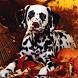 Dalmatian Dog HD Image by wallpaperhd
