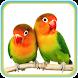 Kicau Master Lovebird Ngekek by Kicau Dev