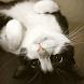 Little Cats Live Wallpaper by Live Wallpaper Workshop