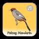 Kicau Poksay Mandarin Fighter by Macaca Inc
