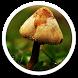 Mushroom Umbrella Photos LWP by Sub Nation