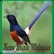 Kicau Burung Murai Batu Malaysia by Jehova app