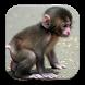 Cute Animal Babies Wallpaper by Pusher Studios Developer