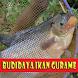 Cara Budidaya Ikan Gurame by GoReading