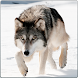 Wild Wolf Attack Simulator 3D by MegaByte Studios - 3D Shooting & Simulation Games