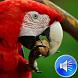 Macaw Bird Sounds Ringtones by msd developer multimedia