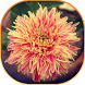 Summer Flowers Live Wallpaper by STECHSOLUTIONS