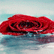 Rainy Red Rose LWP by Daksh Apps