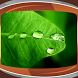 Raindrops Live Wallpapers by Compass Live Wallpapers