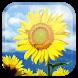 Sunflower Live Wallpaper by Wasabi