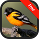 Oriole Bird Sounds by RinradaDev