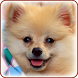 Cute Dogs Wallpapers by siranee