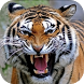 Tiger Sounds Lite by ★★★★★ One Milion Studio