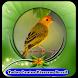 Todos Cantos Pássaros Brasil|mp3 100% Offline by Putra dan Putri Dev