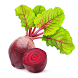 Beetroot Recipes by Green Developer 380