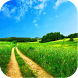 Nature Grass Wallpapers by Karim Gul