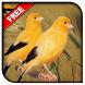 Tutorial Ternak Burung Kenari by HelioCawang