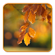 Colorful Leaf Live wallpaper by HD Themes and Wallpaper