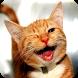 Free Funny Animals Videos by Aplicaciones de videos divertidos humor y animales