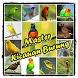 Baru Master Kicau Burung by Berkah Dalem Dev