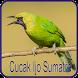 Kicau Cucak Ijo Sumatra by Jehova app