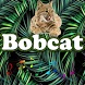 The best Bobcat Sounds by MarcosMusic