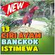 13 Ciri Ayam Bangkok Istimewa by Padepokan Cirebon-Banten