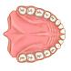 Dentist Pro Premium by Diablo Code