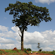 Useful Trees of East Africa by Staf Lemmens