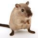 Funny Mouse - Prank App by Pradeep Kumar Paijwar