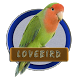 Kicau Burung Lovebird Populer by Silalahi App